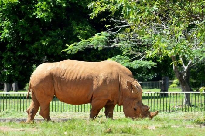 Rinoceronte resgatado de um circo