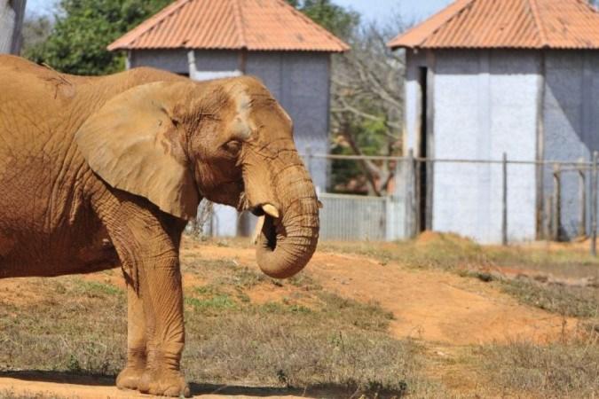 Zoológico de Brasília reabre após 6 meses; veja regras para visitação