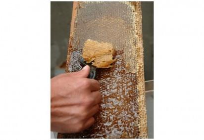 O mel é um dos alimentos mais comumente falsificados -  (crédito: Epagri/Divulgação)