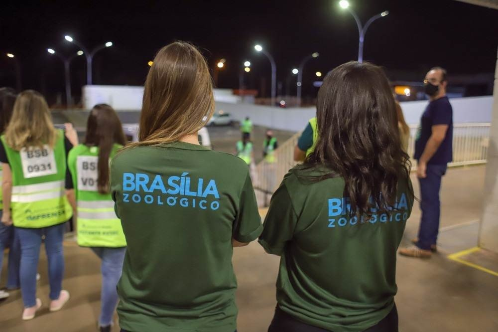 O zoológico de Brasília irá receber dois filhotes de onça-pintada e um lobo guará que estavam órfãos no estado do Mato Grosso