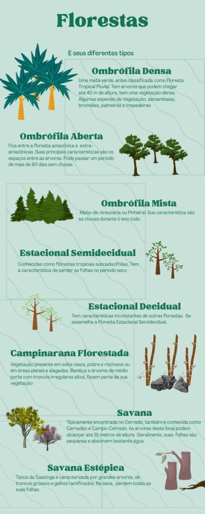 Característica das florestas